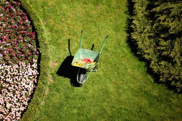 planting av blomsterbed